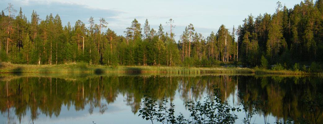 Pohjois-Euroopan laajimmat erämaat sekä Oulangan kansallispuisto houkuttelevat vaeltajia kesäiseen Sallaan.