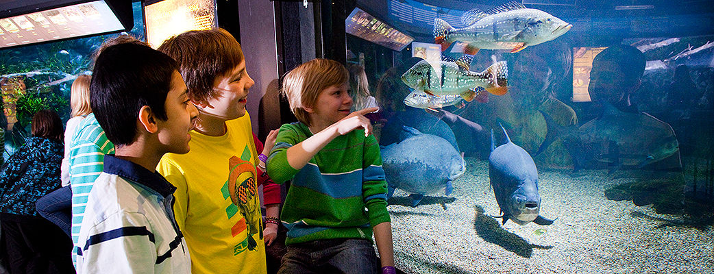 The aquarium at Särkänniemi theme park also offers activities suitable for school groups staying at Tampereen Kylpylä.